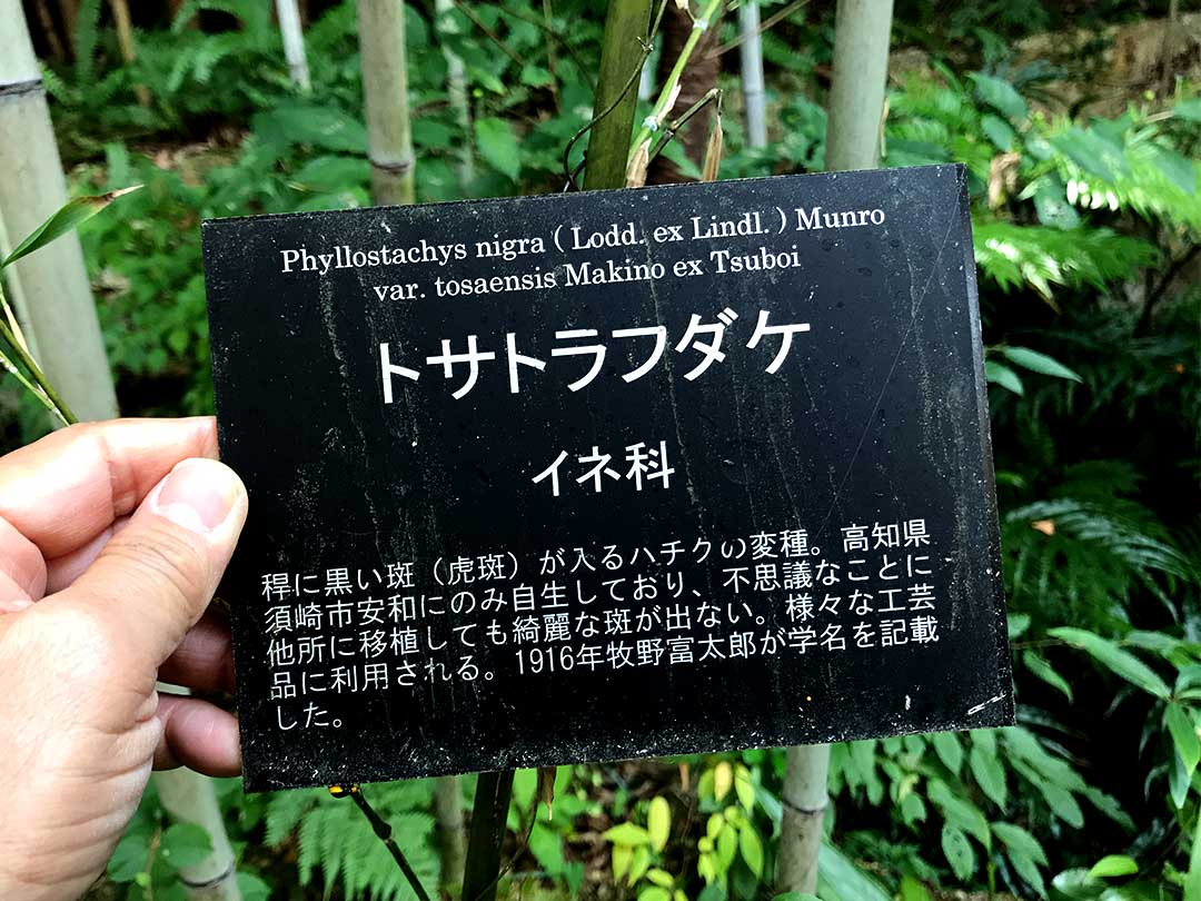 牧野植物園にある日本唯一の虎竹の説明書