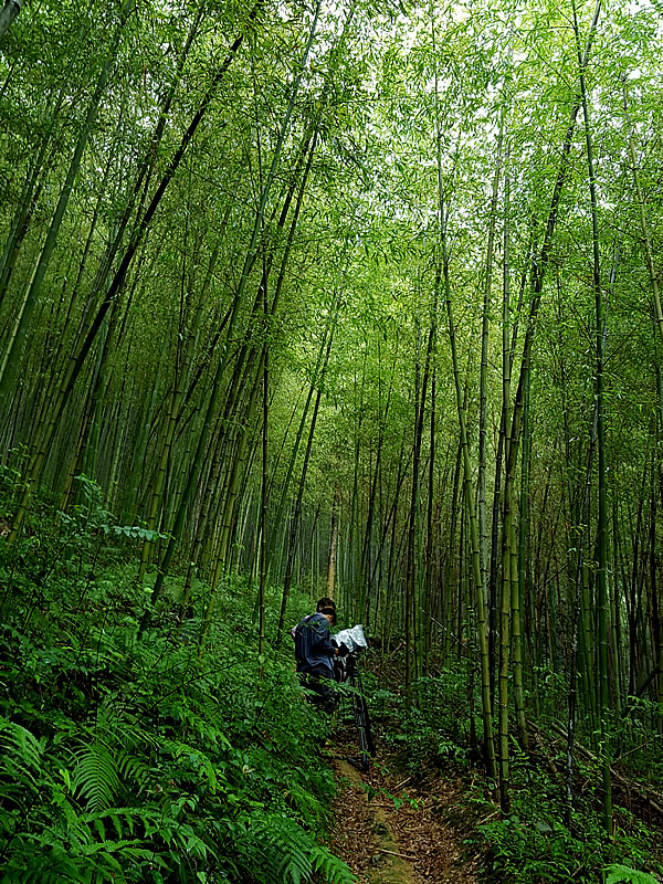 雨の虎竹の里