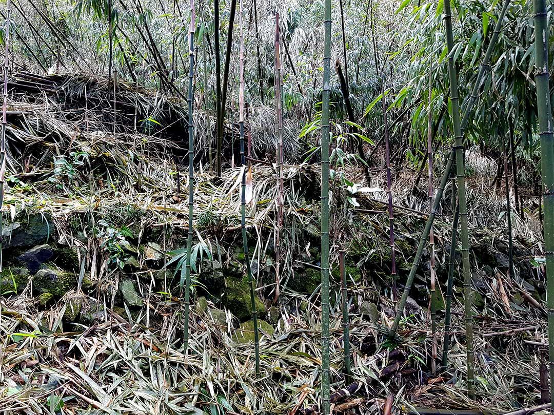 白木谷四方竹見学