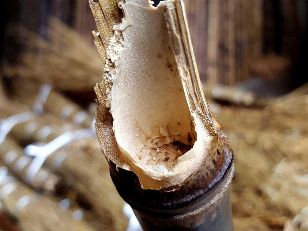 竹の虫の害