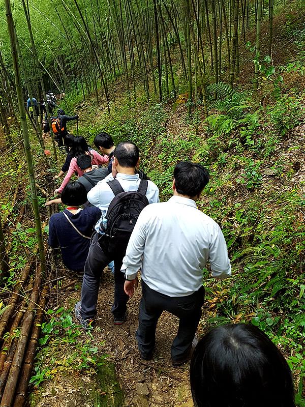 雨の虎竹の里の山道