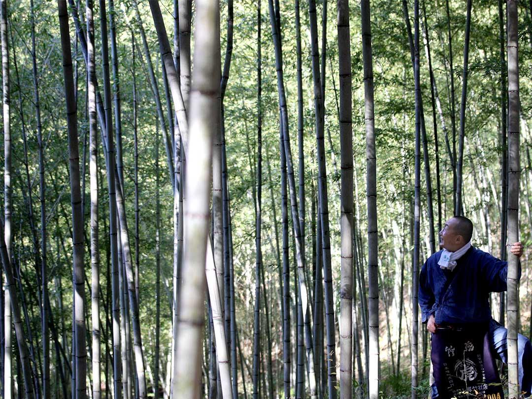 竹虎四代目(YOSHIHIRO YAMAGISHI)、山岸義浩、虎竹の里
