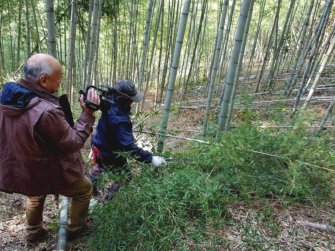 日本唯一の虎竹伐採、山の職人