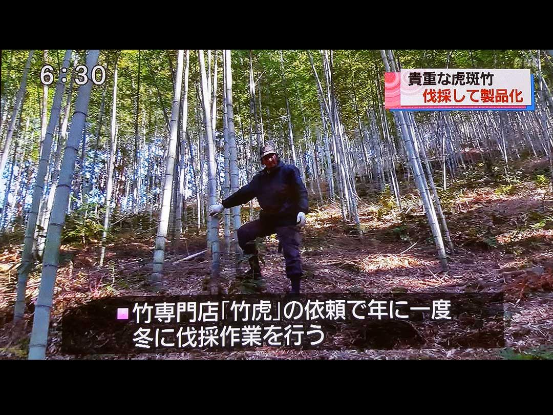 日本唯一の虎竹伐採、RKC高知放送テレビ番組「こうち eye」