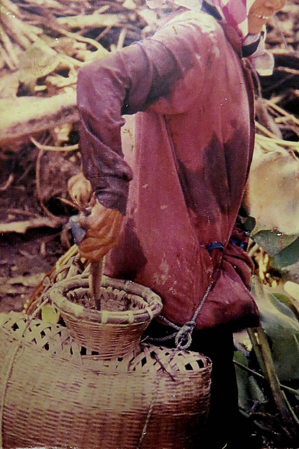 タイで使われている魚籠