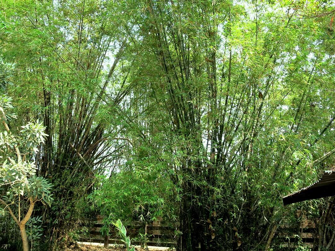 タイの竹材