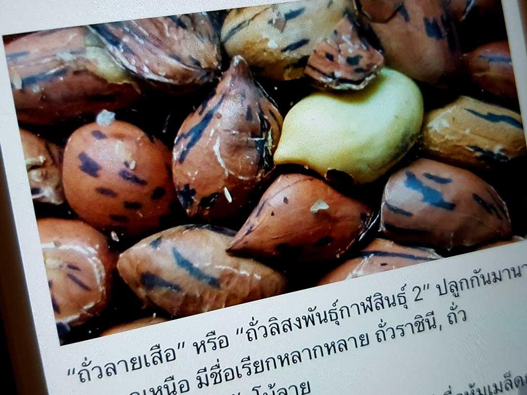 タイのピーナツ