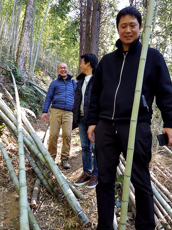 虎竹の里、竹林