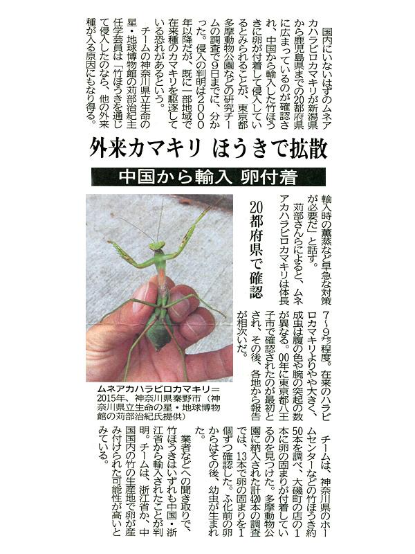 ムネアカハラビロカマキリの新聞記事