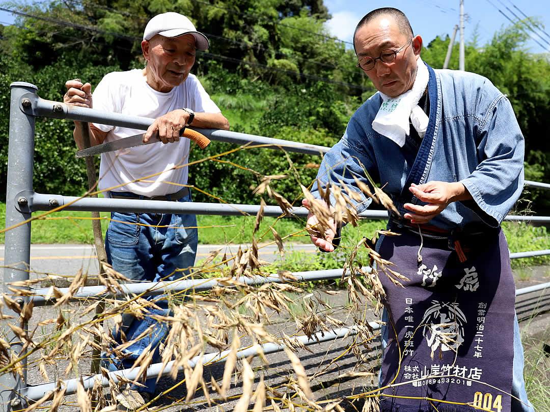 竹虎四代目(山岸義浩、YOSHIHIRO YAMAGISHI)、竹の花、竹の種