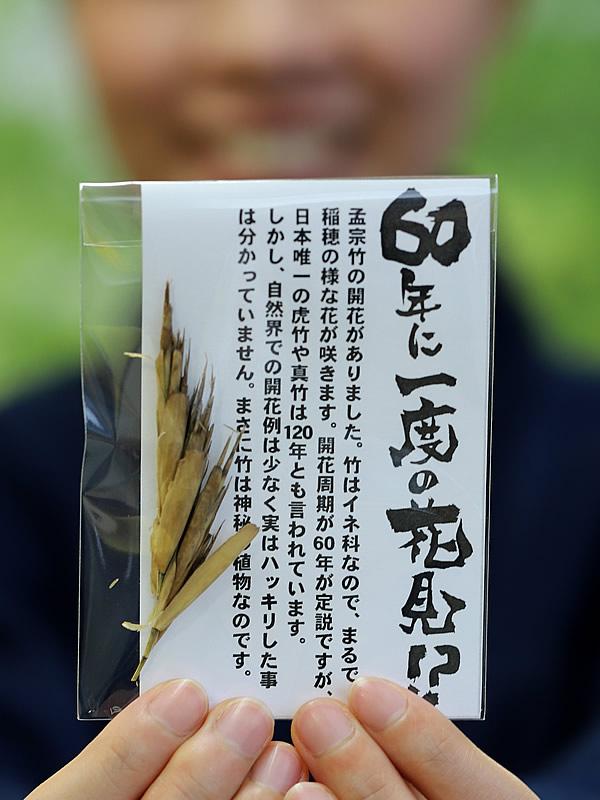 竹の花プレゼント