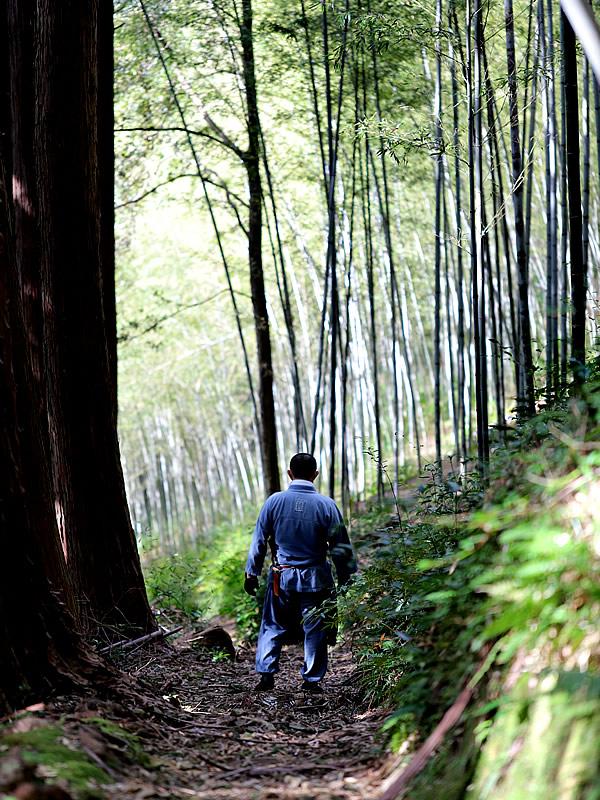 竹虎四代目、日本唯一の虎竹