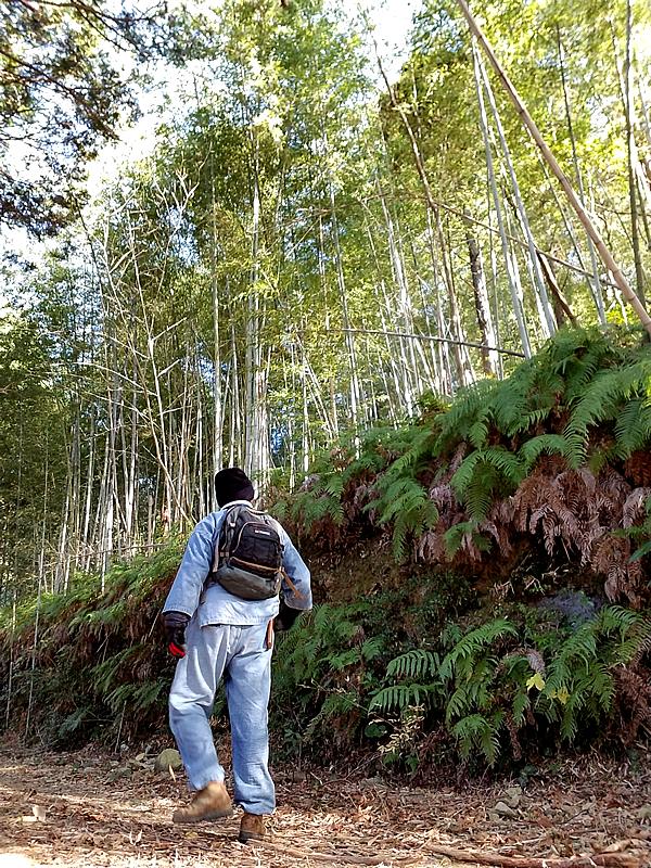 新春虎竹の里のウォーキング