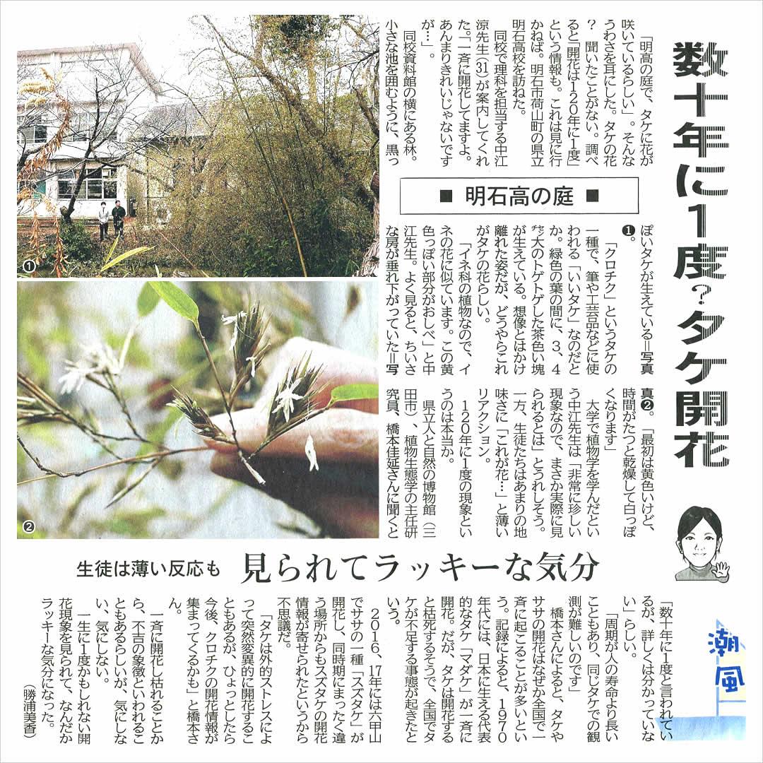 黒竹の開花、新聞記事
