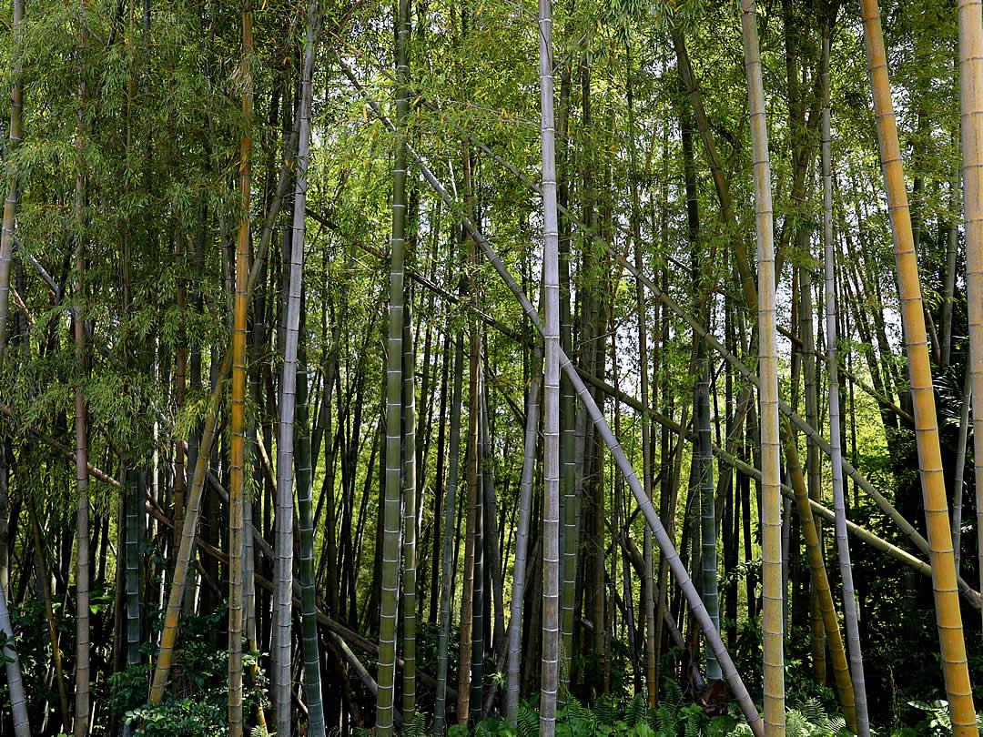 荒れた竹林