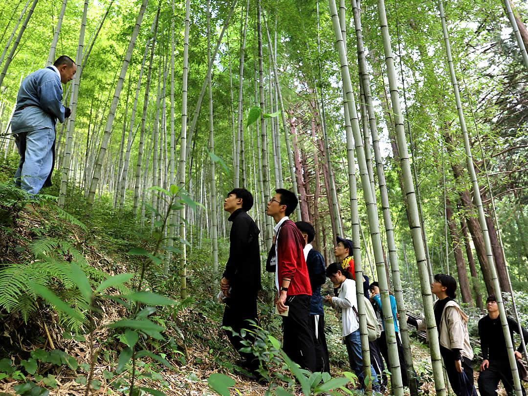 竹虎インターンシップ2019、竹林見学