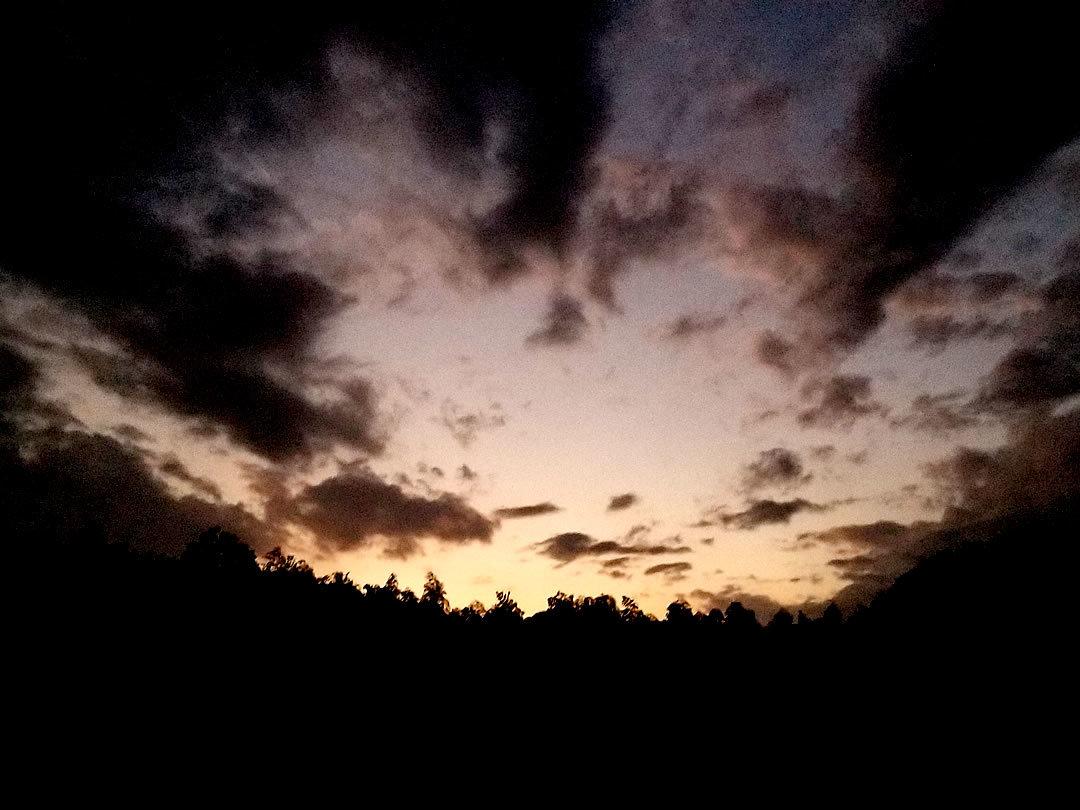 竹林の夕日