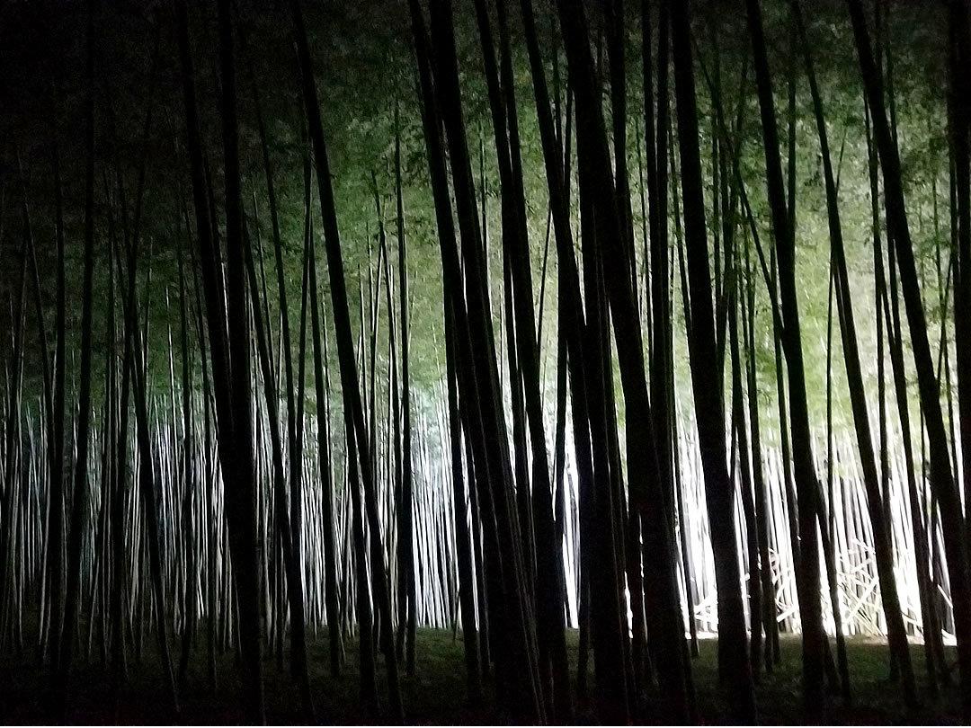 ライトアップされた竹林