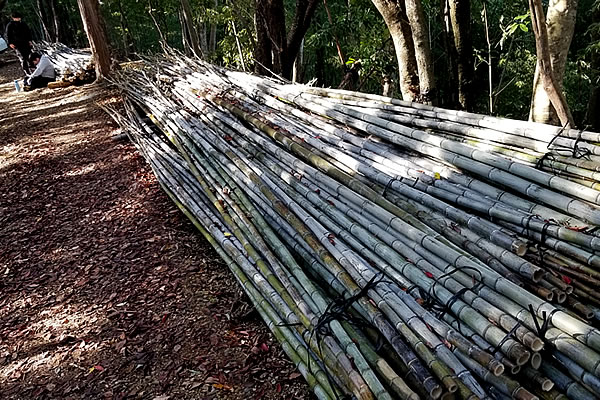 虎竹の山出し