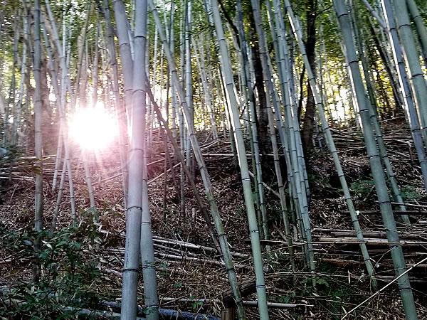 虎竹の里、虎竹