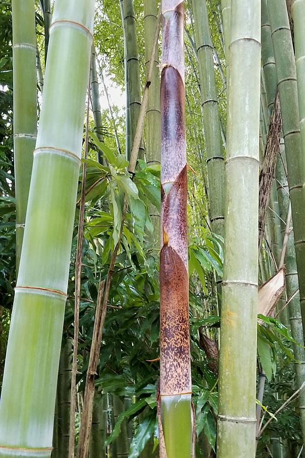 筍から竹へ