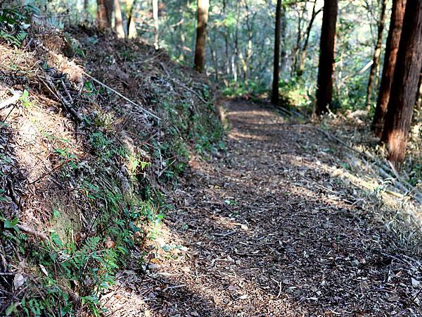 虎竹の運ばれる山道