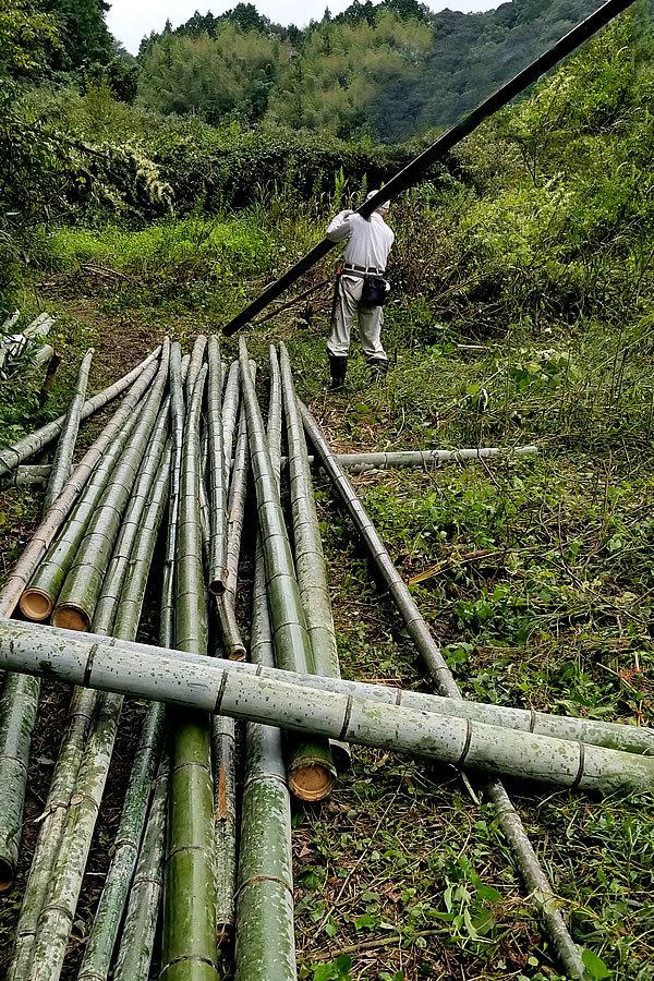 孟宗竹伐採