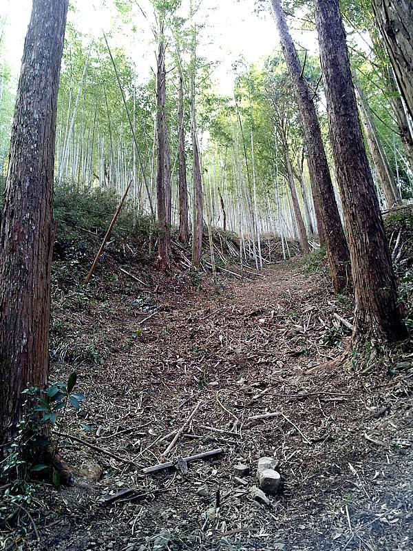 虎竹の里の山々