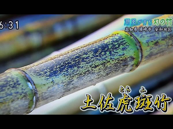 土佐虎斑竹