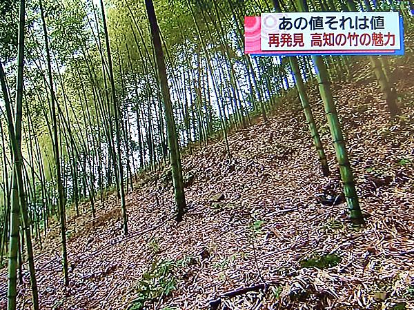 RKC高知放送こうちeye「あの値高知の竹を再発見!」