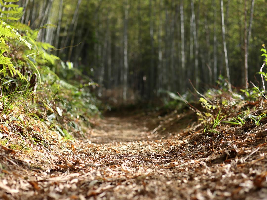 虎竹の山道