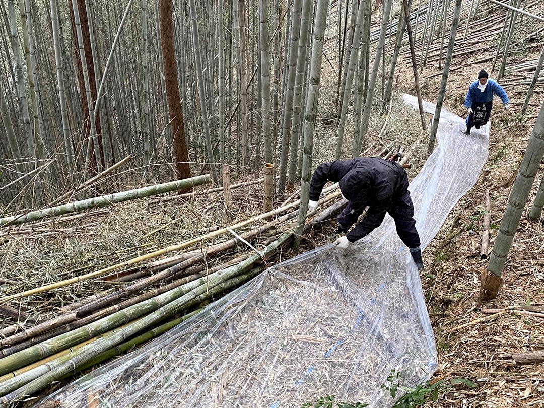 竹の道保全