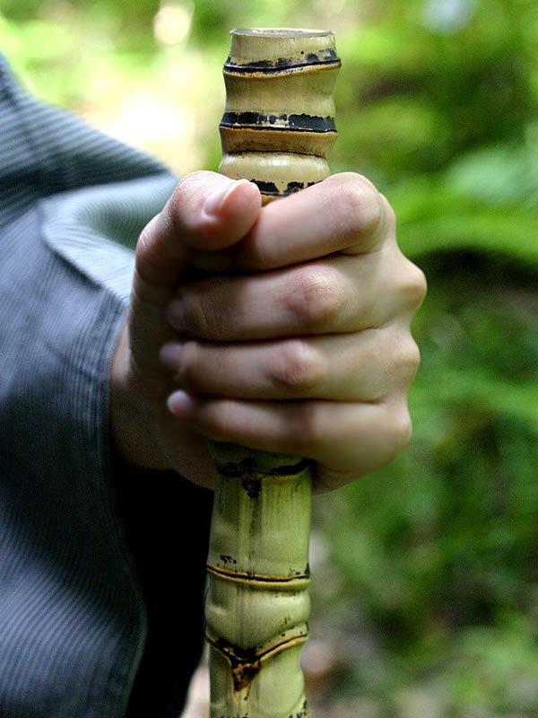 布袋竹、五三竹、遍路杖