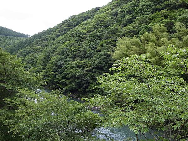森林県高知