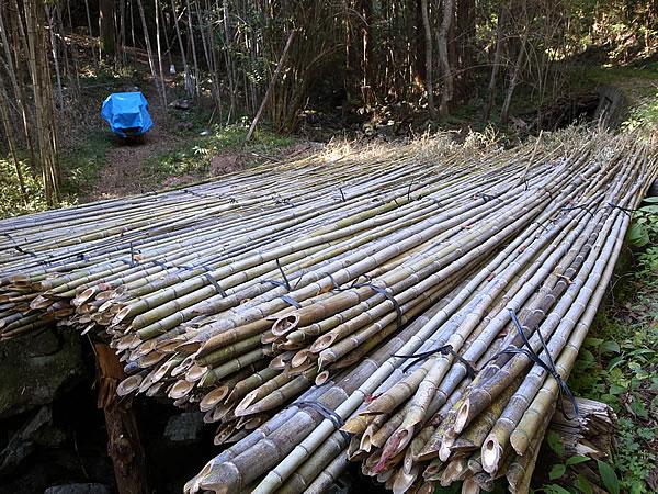 虎竹の山だし
