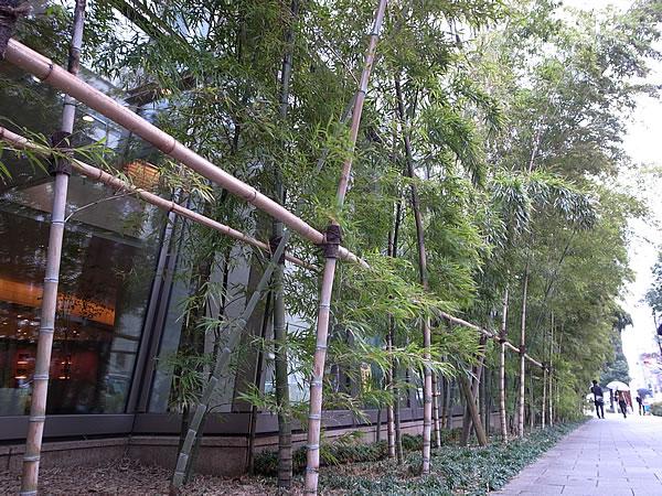 竹の植え込み