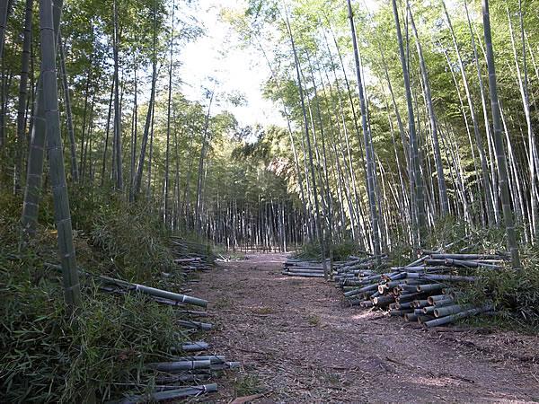 竹林の間伐