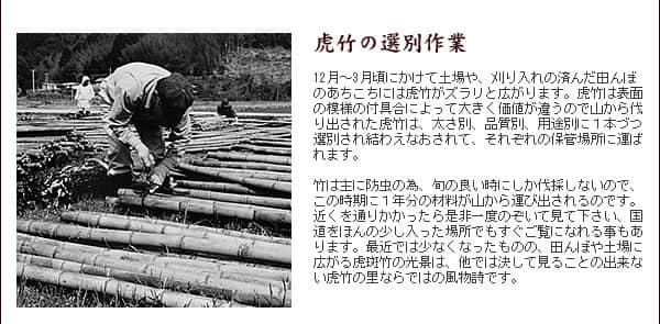 虎竹の選別作業