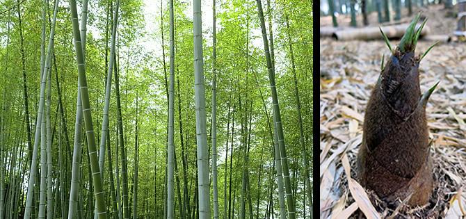 無尽蔵の竹資源