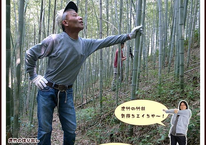 虎竹の伐り出し