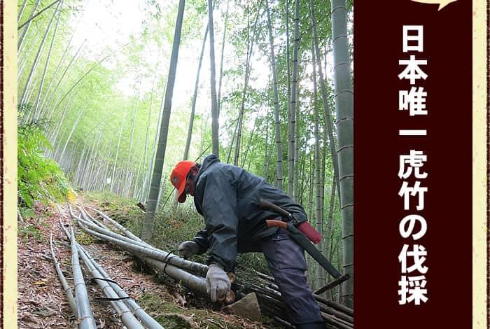 日本唯一虎竹の伐採