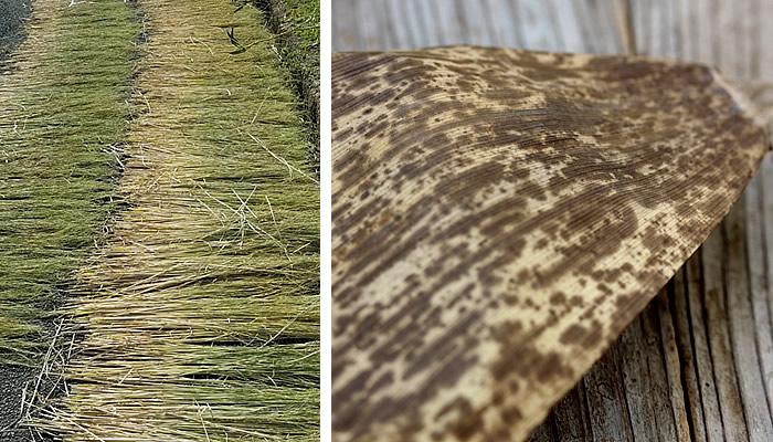 稲わら,竹皮草履
