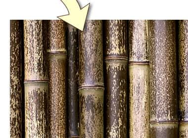 虎竹の模様