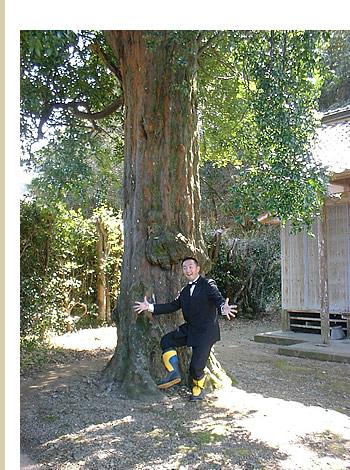 樹齢500年の大ナギ