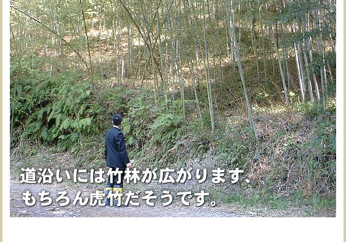 道沿いには竹林が広がります。