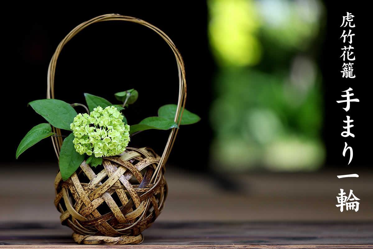 気軽に飾りやすいサイズで丸みのある形が可愛らしい虎竹花籠  てまり一輪