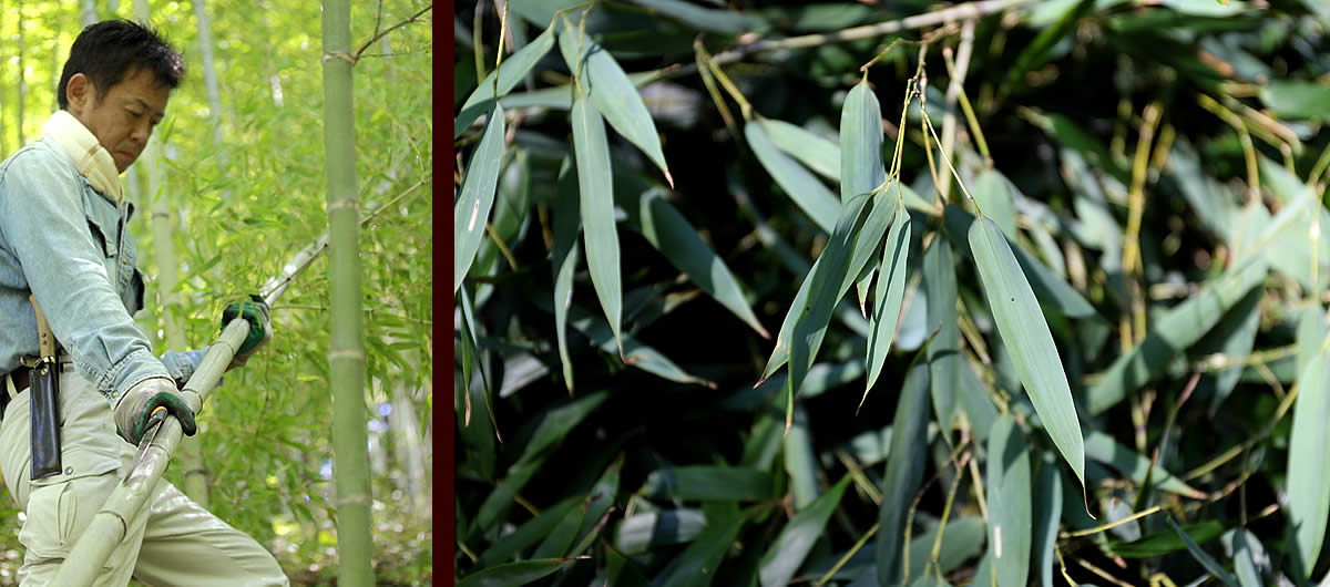 竹虎工場長と竹葉