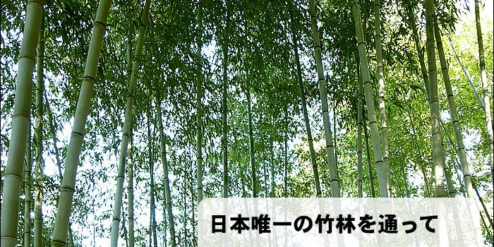 日本唯一の竹林を通って
