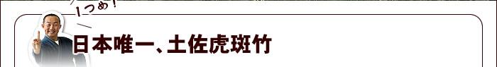 日本唯一、土佐虎斑竹