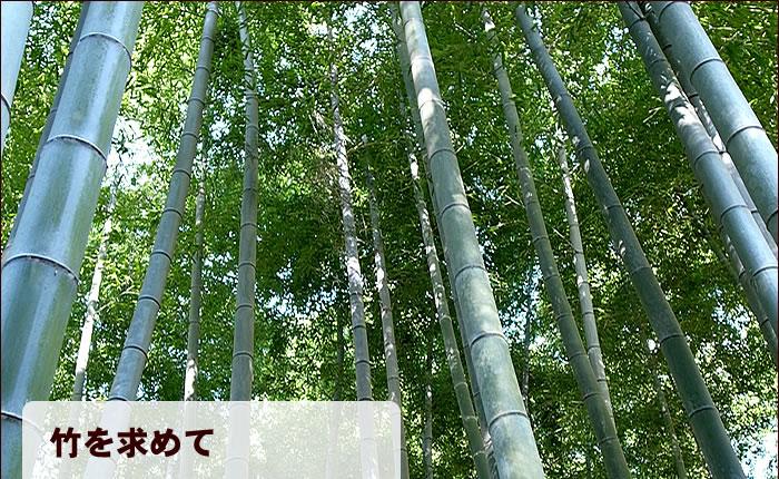 竹を求めて